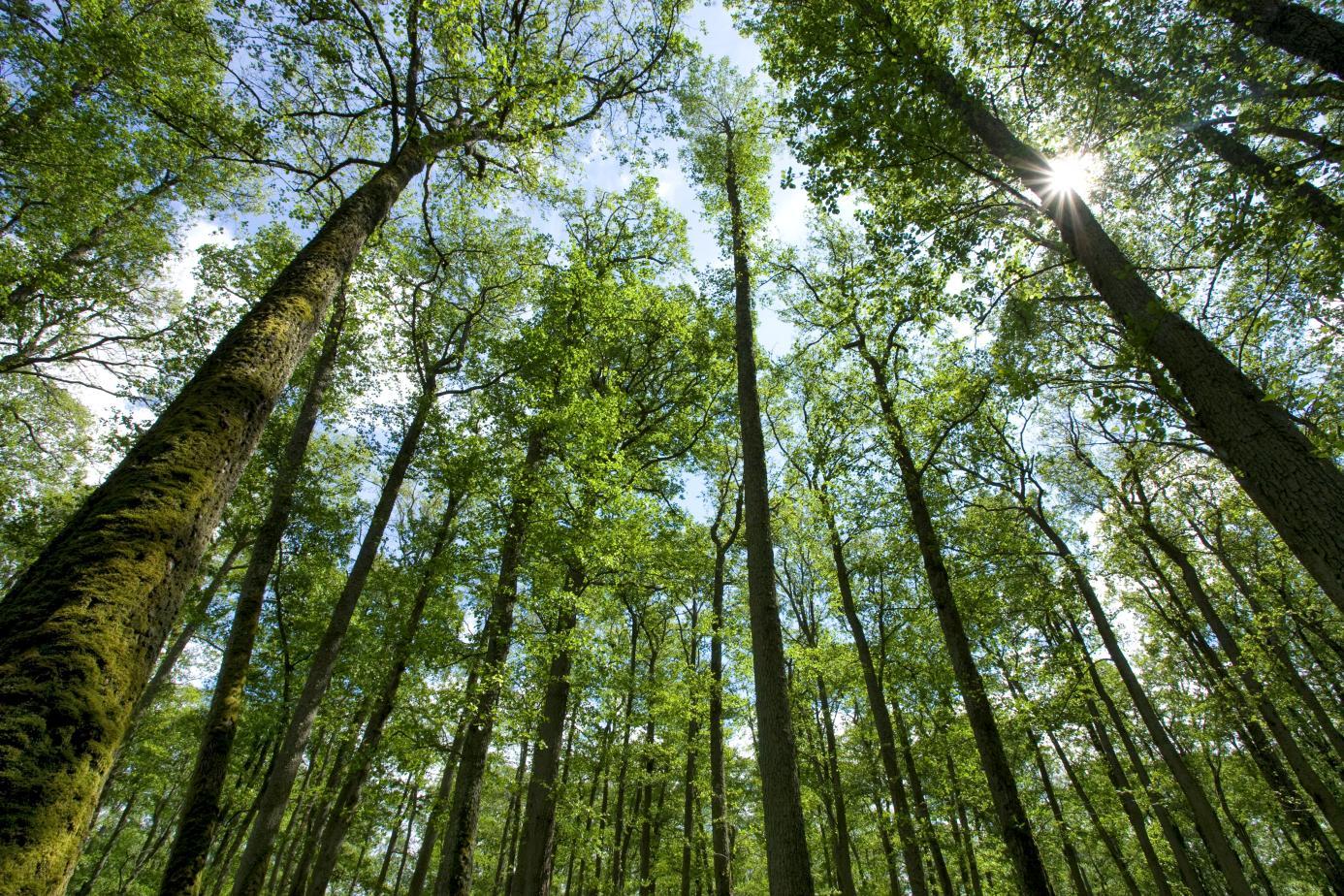green public procurement reports from european environment bureau