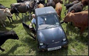 040115-Friends of Earth-cows-cars copy