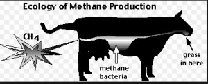sketch cow and methane copy
