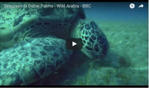 seagrasss-bbc-film